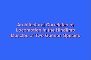Architectural Correlates of Locomotion in the Hindlimb Muscles of Two Guenon Species