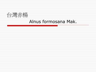 台灣赤楊  Alnus formosana Mak.