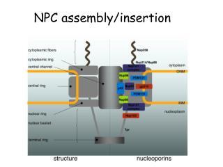 NPC assembly/insertion