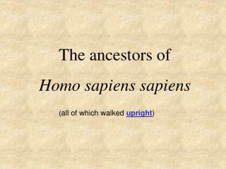 The ancestors of  Homo sapiens sapiens