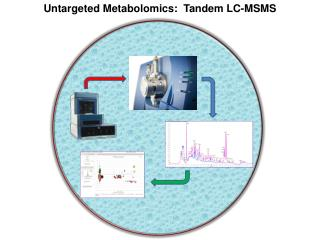 Untargeted Metabolomics:  Tandem LC-MSMS