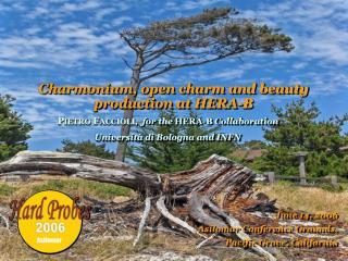 Charmonium, open charm and beauty   production at HERA-B