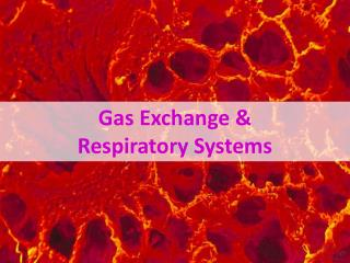 Gas Exchange &  Respiratory Systems
