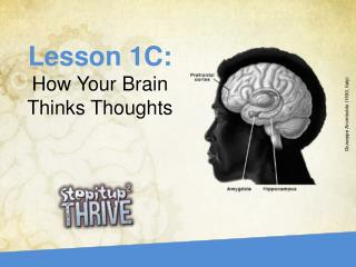 Lesson 1C: How Your Brain Thinks Thoughts
