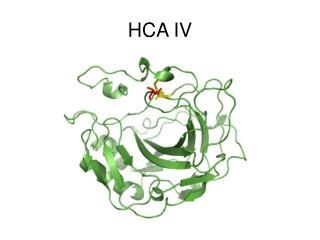 HCA IV