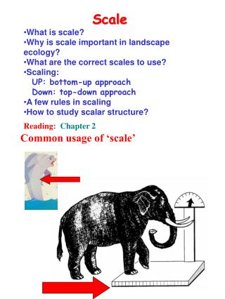 Scale What is scale? Why is scale important in landscape ecology?
