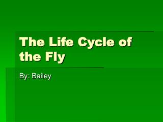 The Life Cycle of the Fly