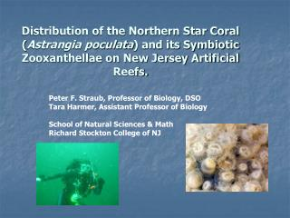 Distribution of the Northern Star Coral Astrangia poculata and its Symbiotic Zooxanthellae on New Jersey Artificial Reef