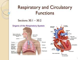 Respiratory and Circulatory Functions