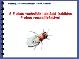 G énmanipuláció ecetmuslicában:  P elem technikák