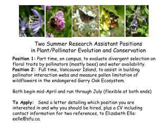 Two Summer Research Assistant Positions in Plant/Pollinator Evolution and Conservation