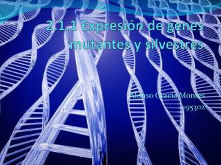 2.1.1 Expresión de genes mutantes y silvestres