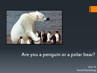 Are you a penguin or a polar bear?