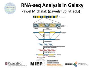 RNA- seq Analysis in Galaxy