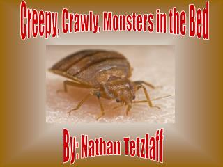 Creepy, Crawly, Monsters in the Bed