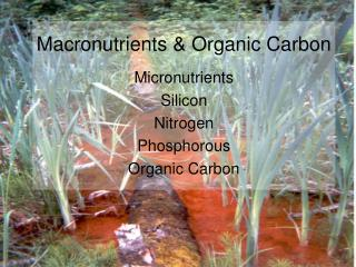 Macronutrients & Organic Carbon
