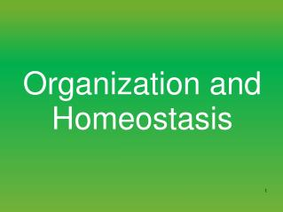 Organization and Homeostasis