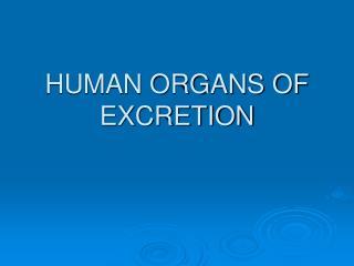 HUMAN ORGANS OF EXCRETION