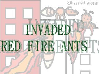 INVADED  RED FIRE ANTS