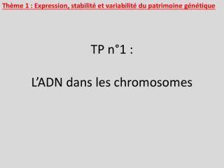 TP n°1 :  L'ADN dans les chromosomes