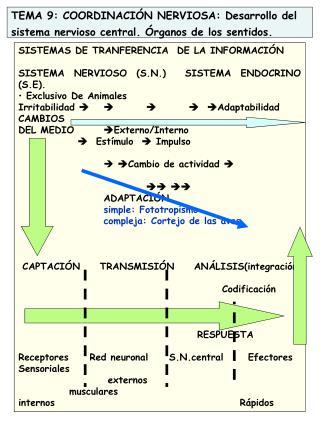 TEMA 9: COORDINACIÓN NERVIOSA: Desarrollo del sistema nervioso central. Órganos de los sentidos.
