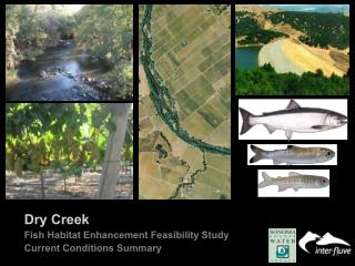 Dry Creek   Fish Habitat Enhancement Feasibility Study Current Conditions Summary