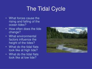 The Tidal Cycle