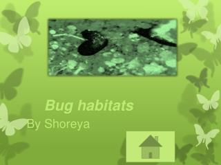 Bug habitats