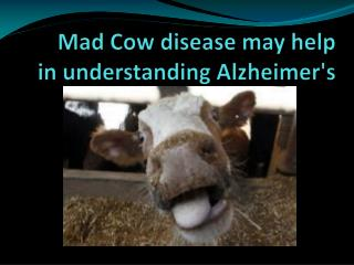 Mad Cow disease may help in understanding Alzheimer's