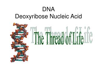 DNA Deoxyribose Nucleic Acid