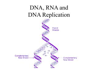 DNA, RNA and  DNA Replication