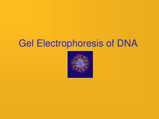 Gel Electrophoresis of DNA