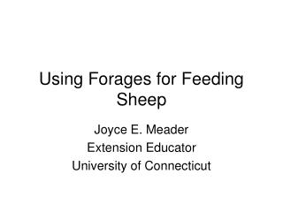 Using Forages for Feeding Sheep