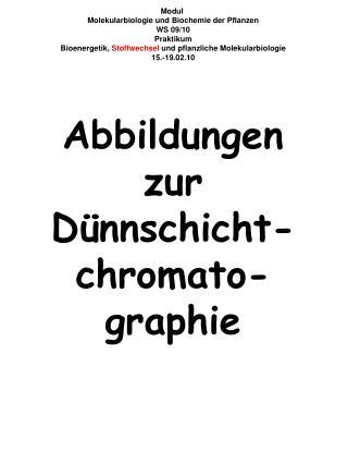Modul  Molekularbiologie und Biochemie der Pflanzen WS 09/10 Praktikum