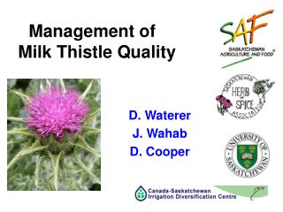 Management of    Milk Thistle Quality