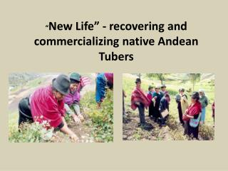 """ New Life"" - recovering and commercializing native Andean Tubers"