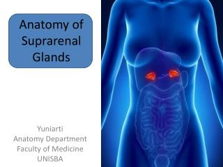 Anatomy of Suprarenal Glands