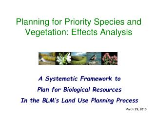 Planning for Priority Species and Vegetation: Effects Analysis