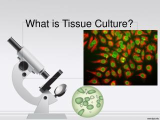 What is Tissue Culture?