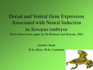 Dorsal and Ventral Gene Expression Associated with Neural Induction  in Xenopus embryos  Notes from review paper by De R