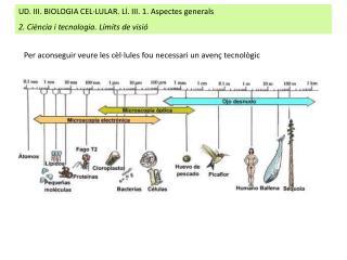 UD. III. BIOLOGIA CEL·LULAR. Ll. III. 1. Aspectes generals