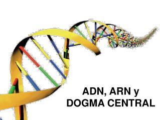 ADN, ARN y DOGMA CENTRAL