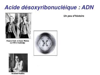 Acide désoxyribonucléique: ADN