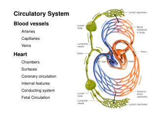 Circulatory System Blood vessels Arteries Capillaries Veins Heart Chambers Surfaces