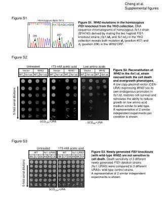 Cheng et al. Supplemental figures