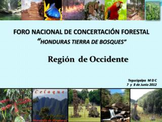 "FORO NACIONAL DE CONCERTACIÓN FORESTAL "" HONDURAS TIERRA DE BOSQUES"""