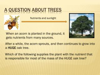 A question about trees