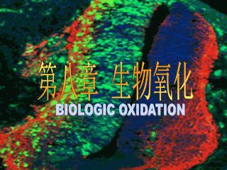 第八章  生物氧化