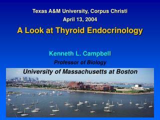 Texas A&M University, Corpus Christi April 13, 2004 A Look at Thyroid Endocrinology