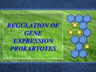 REGULATION OF GENE EXPRESSION PROKARYOTES